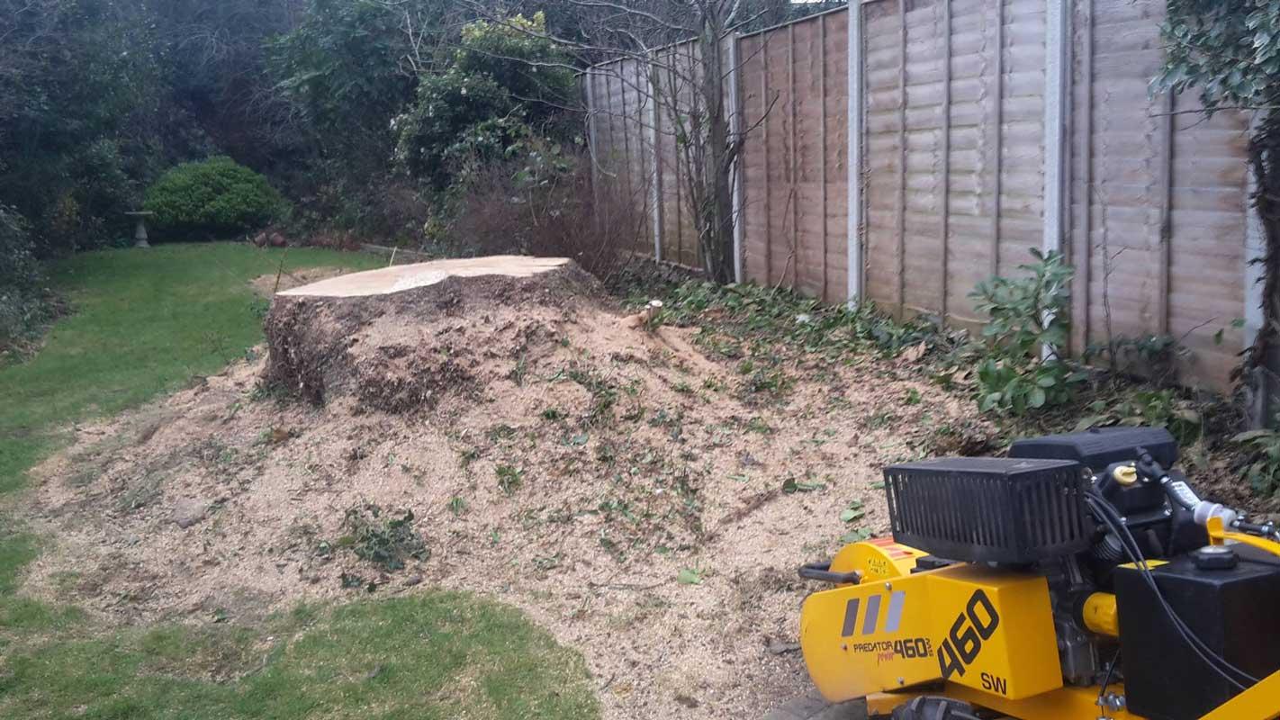 tree stump grinding wolverhampton