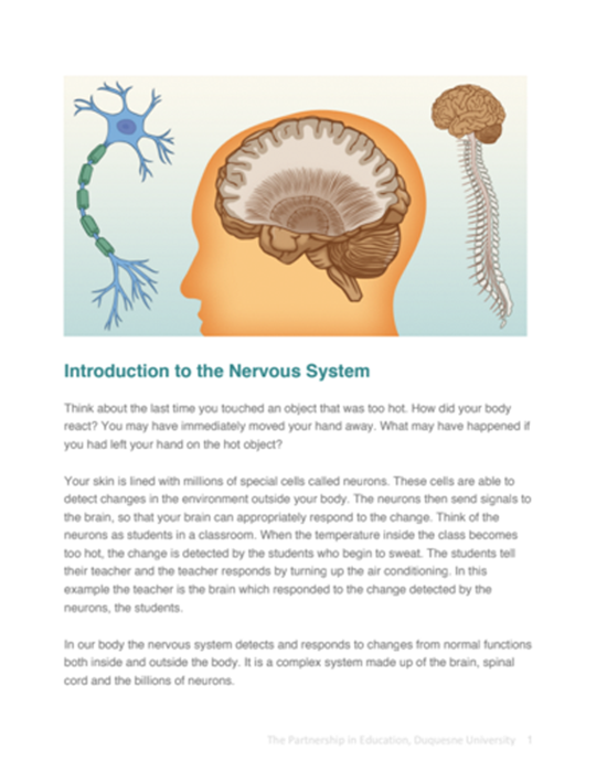 Nervous System Student Reading Pages