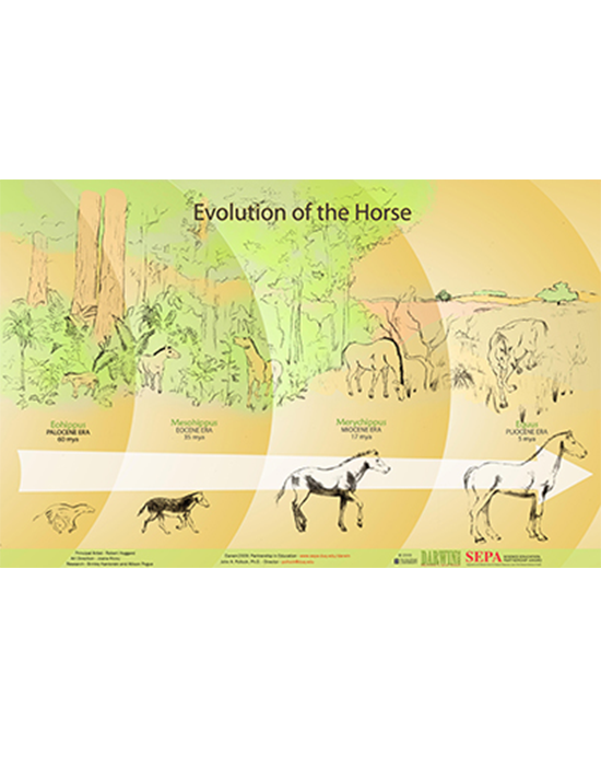 Horse Foot Evolution Activity Guide