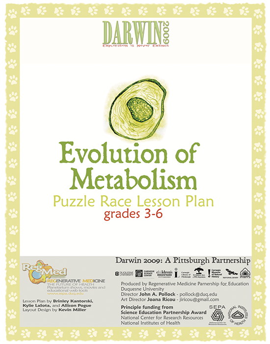Evolution of Metabolism Puzzle Race Lesson Plan