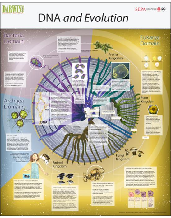 Spiral of Life IV: DNA and Evolution