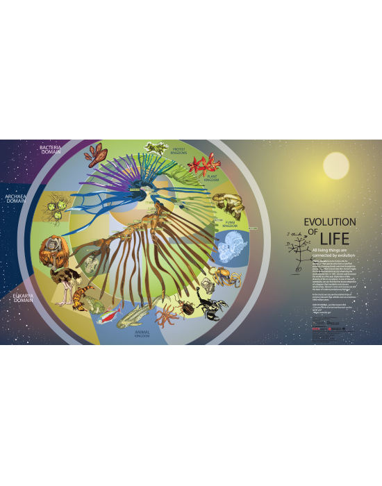 Spiral of Life III: Animal Evolution