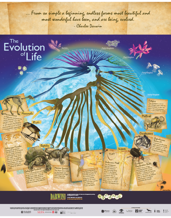 Spiral of Life I: From Darwin to Today