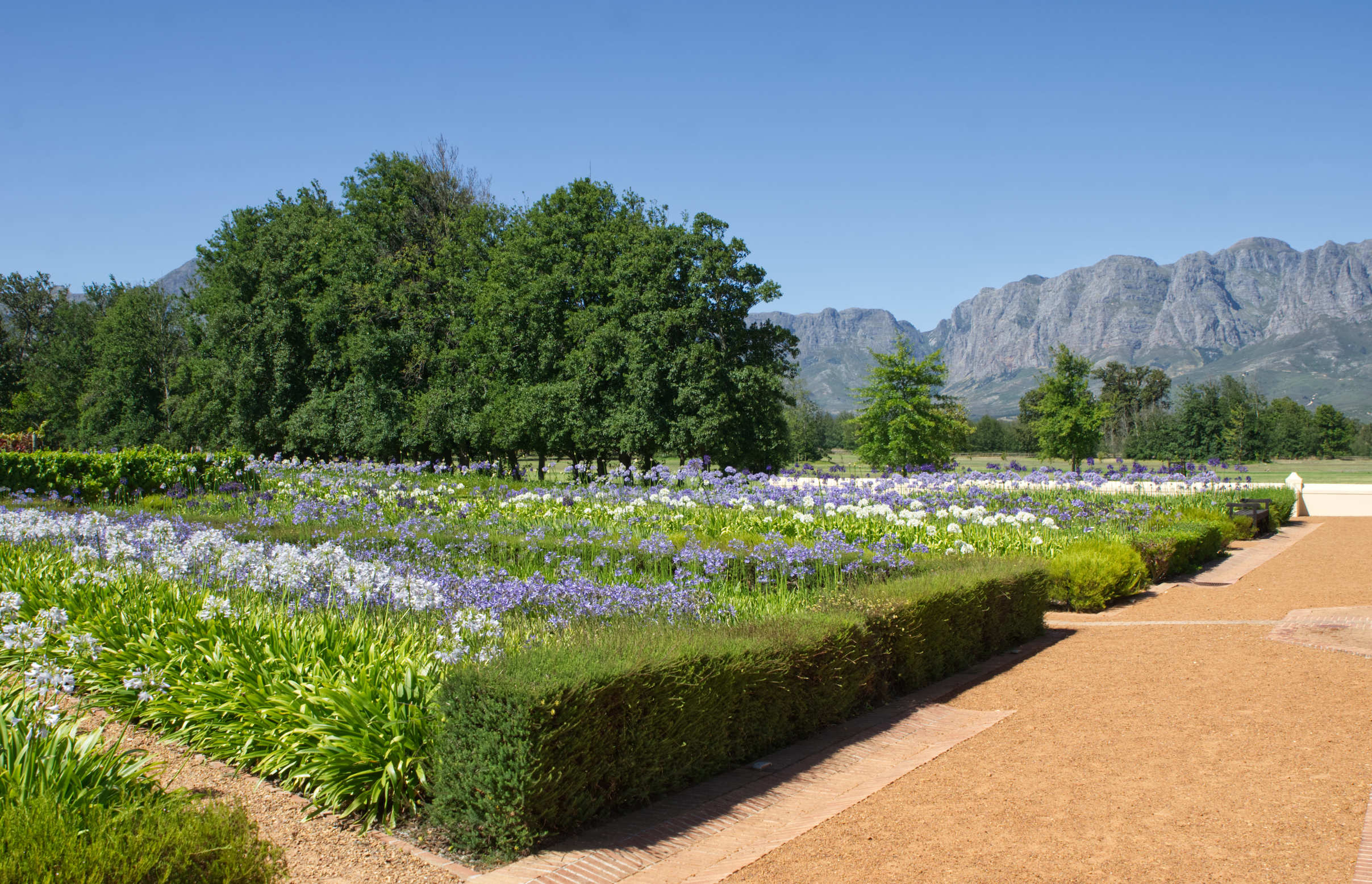 Trees, mountains and flowers with paths at Vergelegen Wine Estate