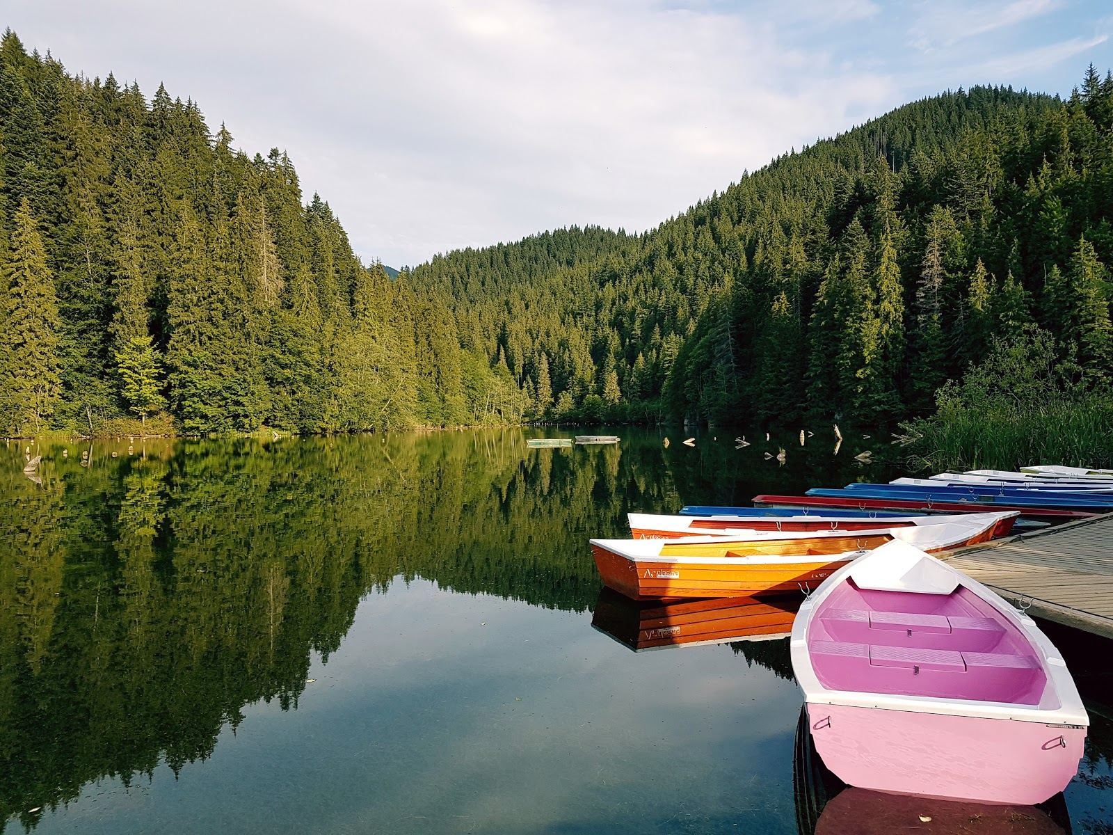 Colorful canoes on lake in forest