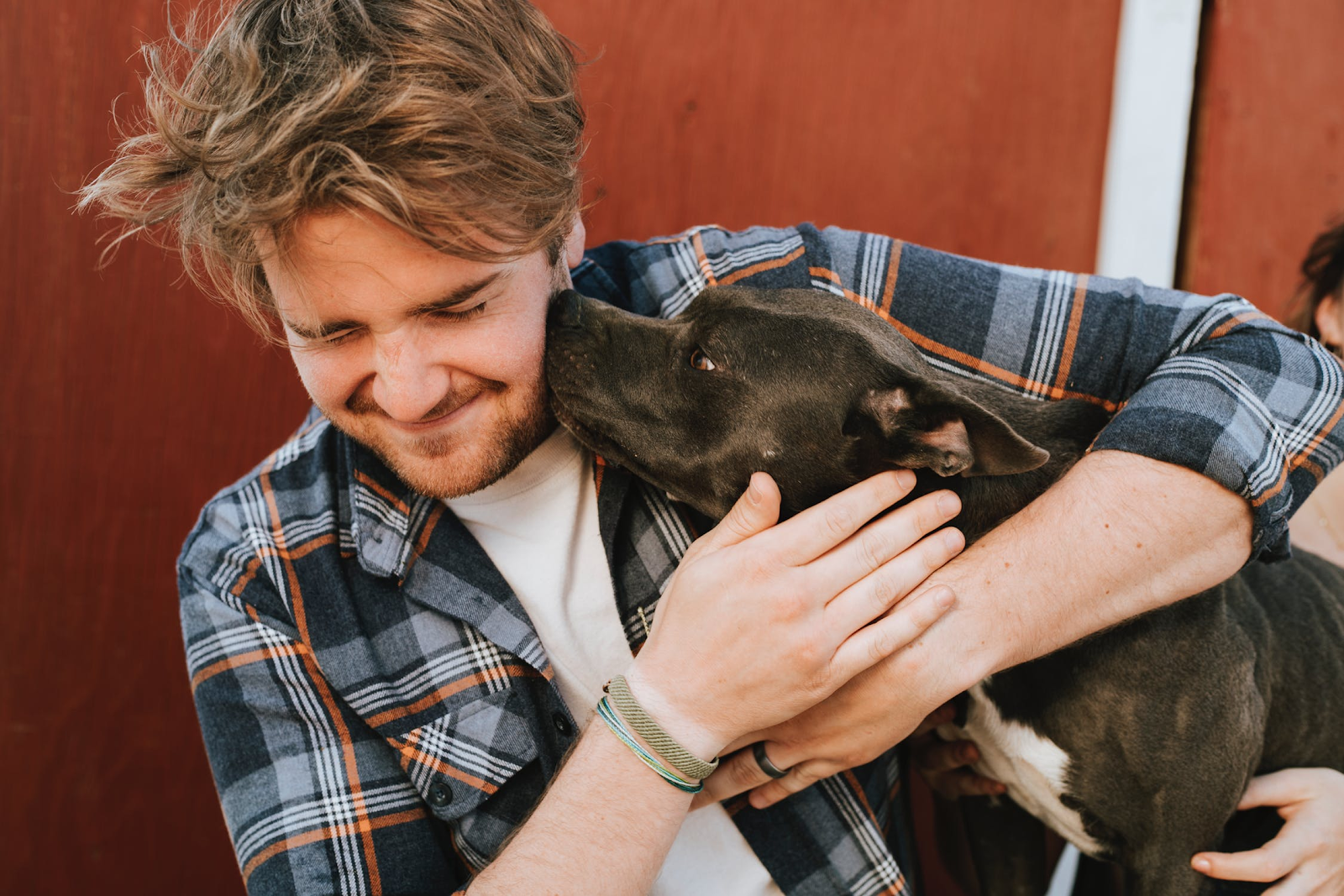 a black pitbull terrier with a white stomach kisses a man with blond hair and a gray and orange flannel shirt on the cheek