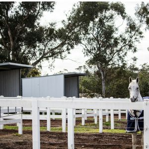 Peppertree Equestrian agistment and schooling