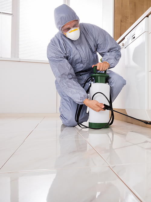 bed bugs pest control in sugar land