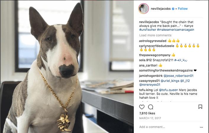 How a pet can grow your social media following