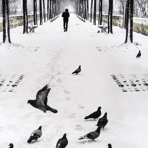 Street photography of a young man walking down a cold, snowy a path with pigeons in Bastille in Paris, France.