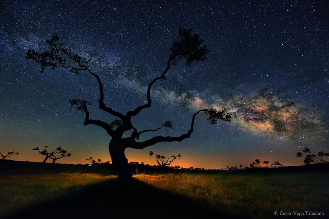 L'arbre de la galaxie