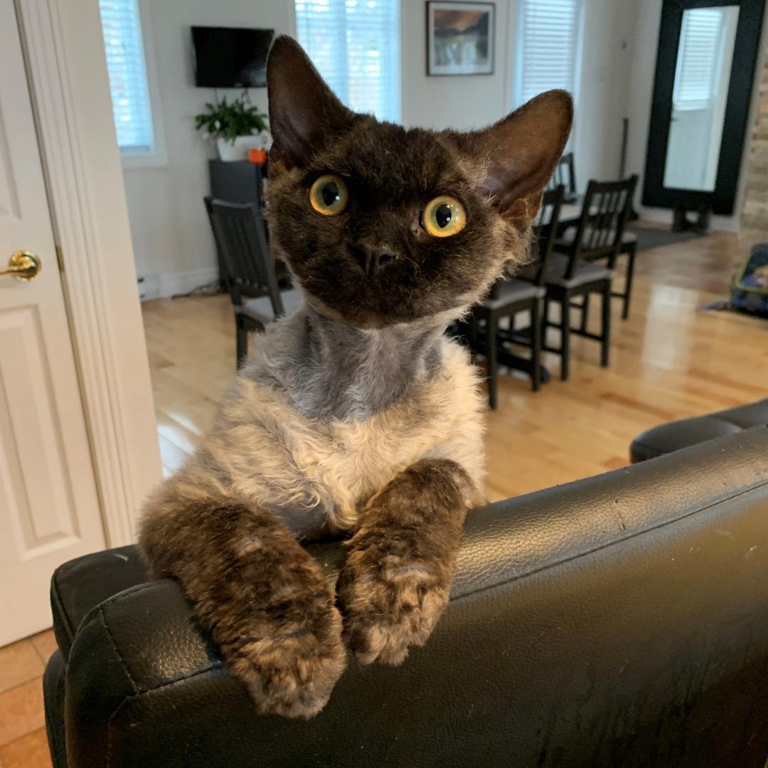 Claude Miron's cat, Neo
