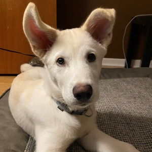 Colleen's Dog, Casper