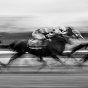 Flatrace Horses