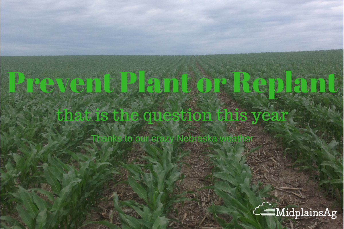 Prevent Plant & Replant by Trent Stremick of ARMtech Insurance Services