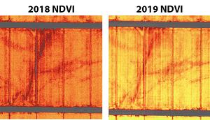 ultra-high-resolution terravion ndvi 2019