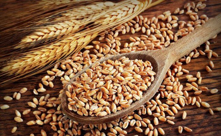 GMO Wheat - Are bread and pasta back on the table for those who suffer from Celiac disease?