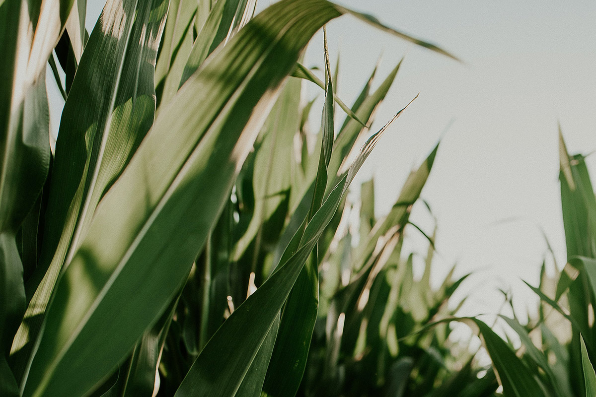 Preparing for the 2021 crop season