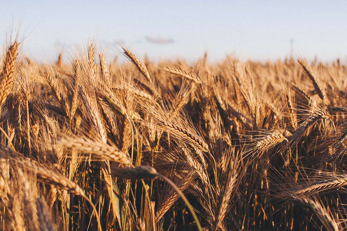Ben Buckner, Grain Market Specialist from AgResource, Shares His Outlook on the World Grain Markets in 2021