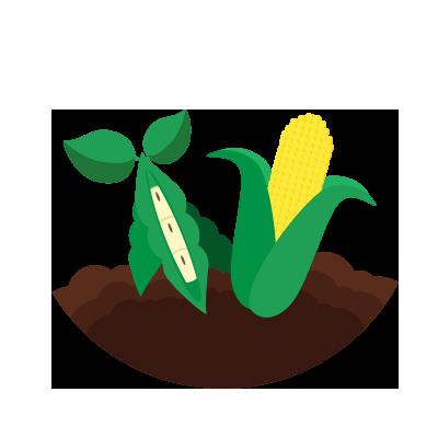 Plant health analytics