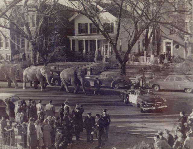 Elephants on NC Avenue