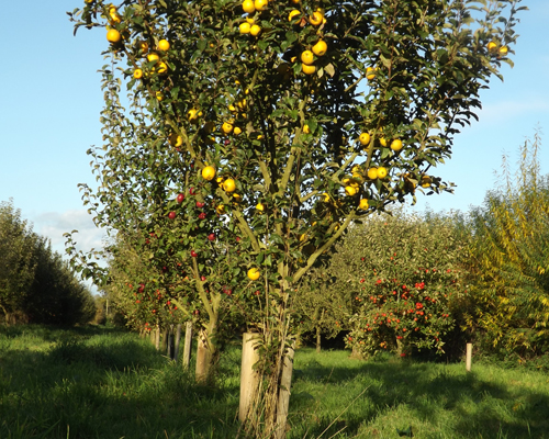 Farrs Field Orchard, Herefordshire | Fruit Orchard Herefordshire