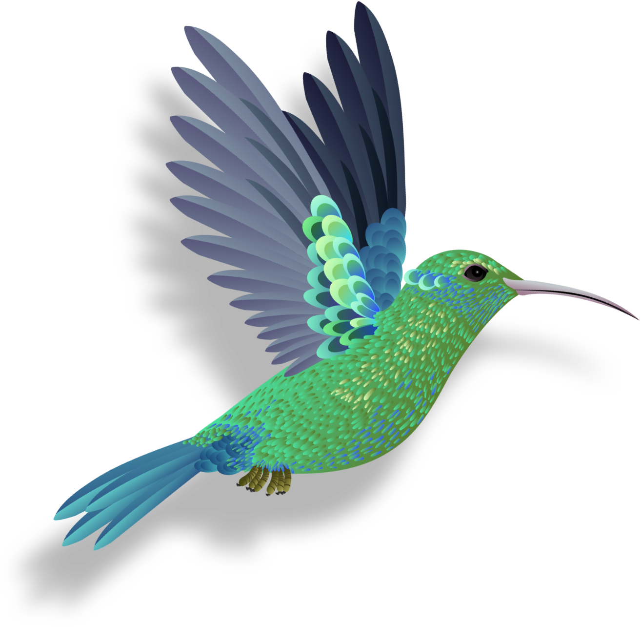 A  flying blue and green hummingbird