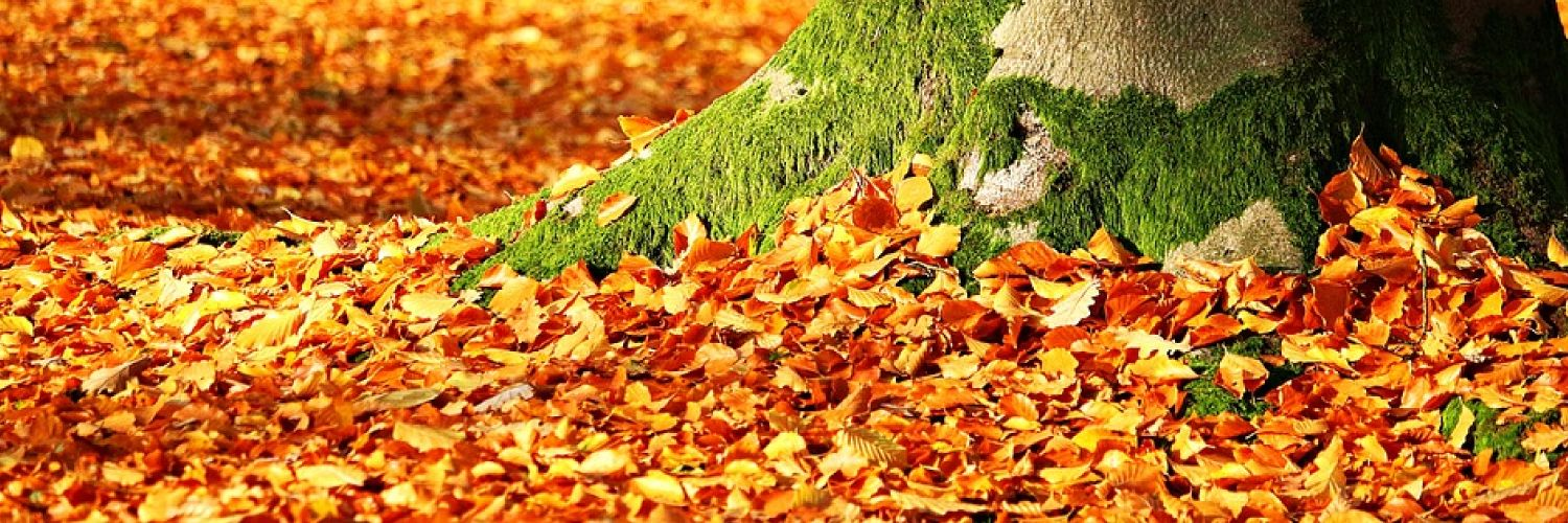 fall clean up services