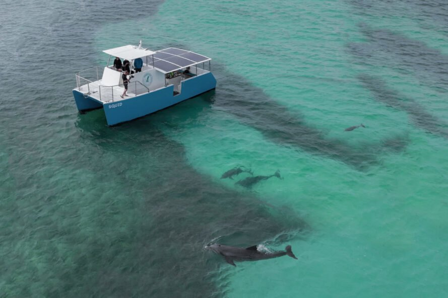 dolphins swimming near solar-powered boat