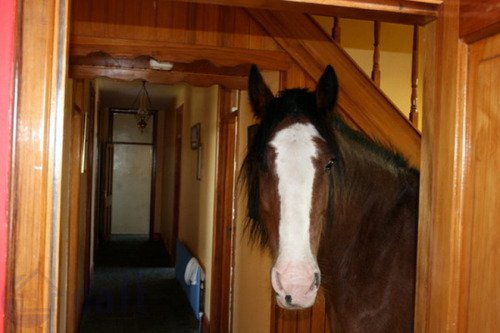 terrible real estate pictures horse