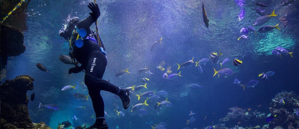 Scuba Diving near North Bay Island in Andaman