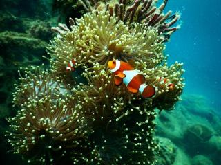 Fish Near Coral Reef - Dive Spot in Andaman