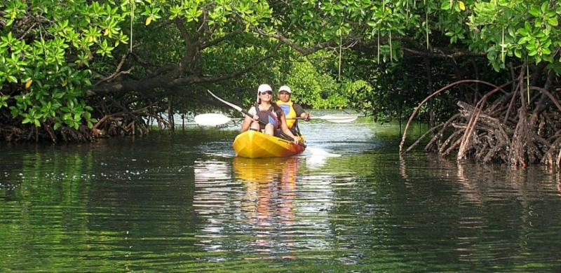 Mangrove Kayaking in Havelock