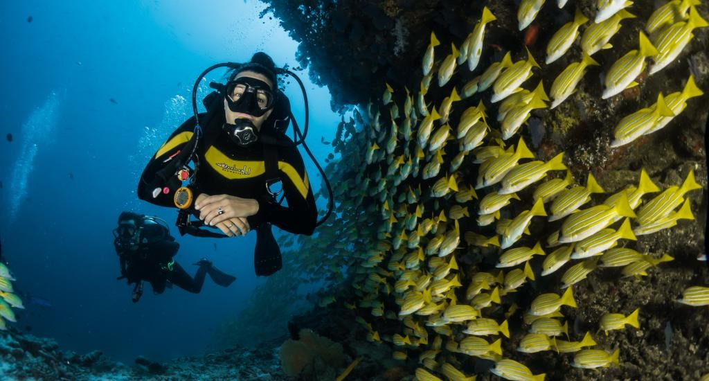 Scuba Diving between fishes