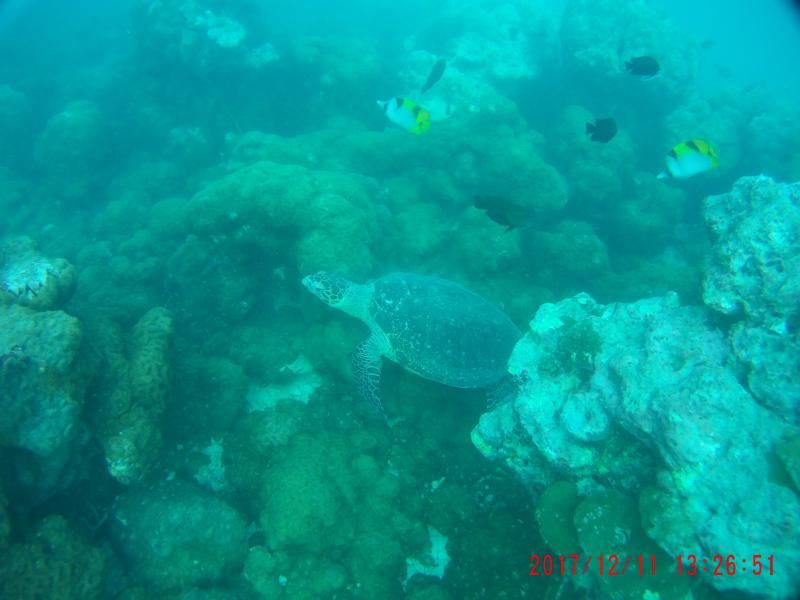 Underwater image of corals and fish in Neil Island