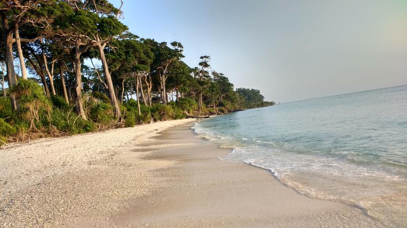 Laxmanpur Beach Jungle in Neil Island