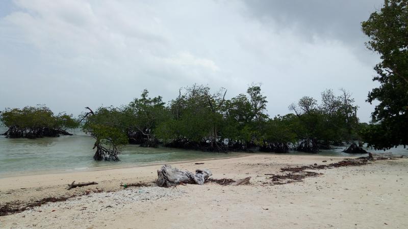 Trees near Laxmanpur beach