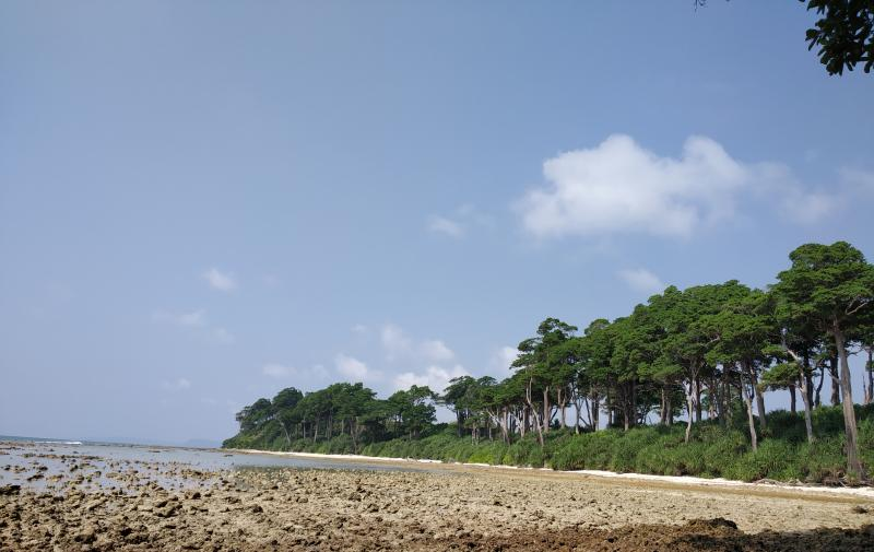 Laxmanpur beach Forests