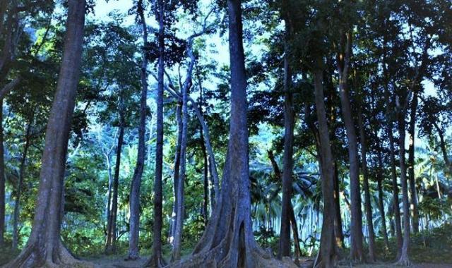 Jungle Trek at the Radhanagar Beach