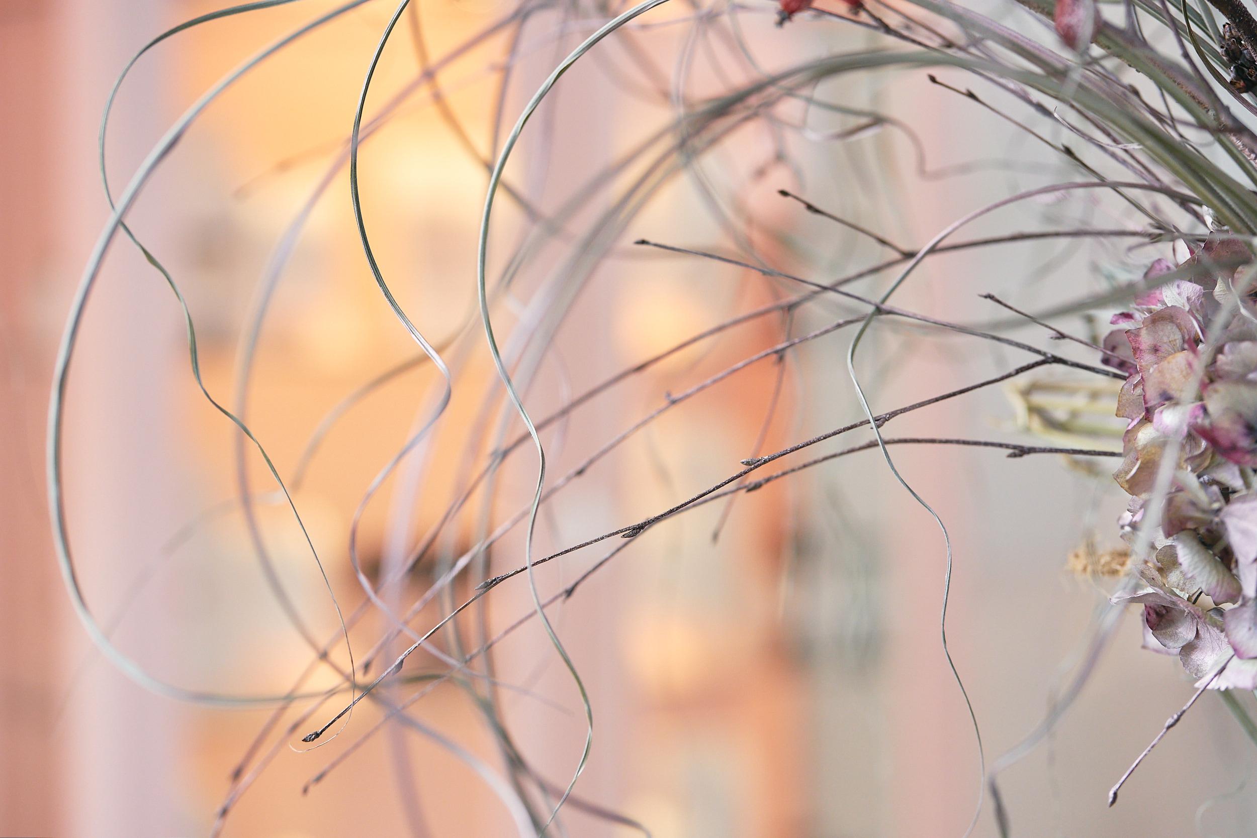 Blackbird Photography by VA