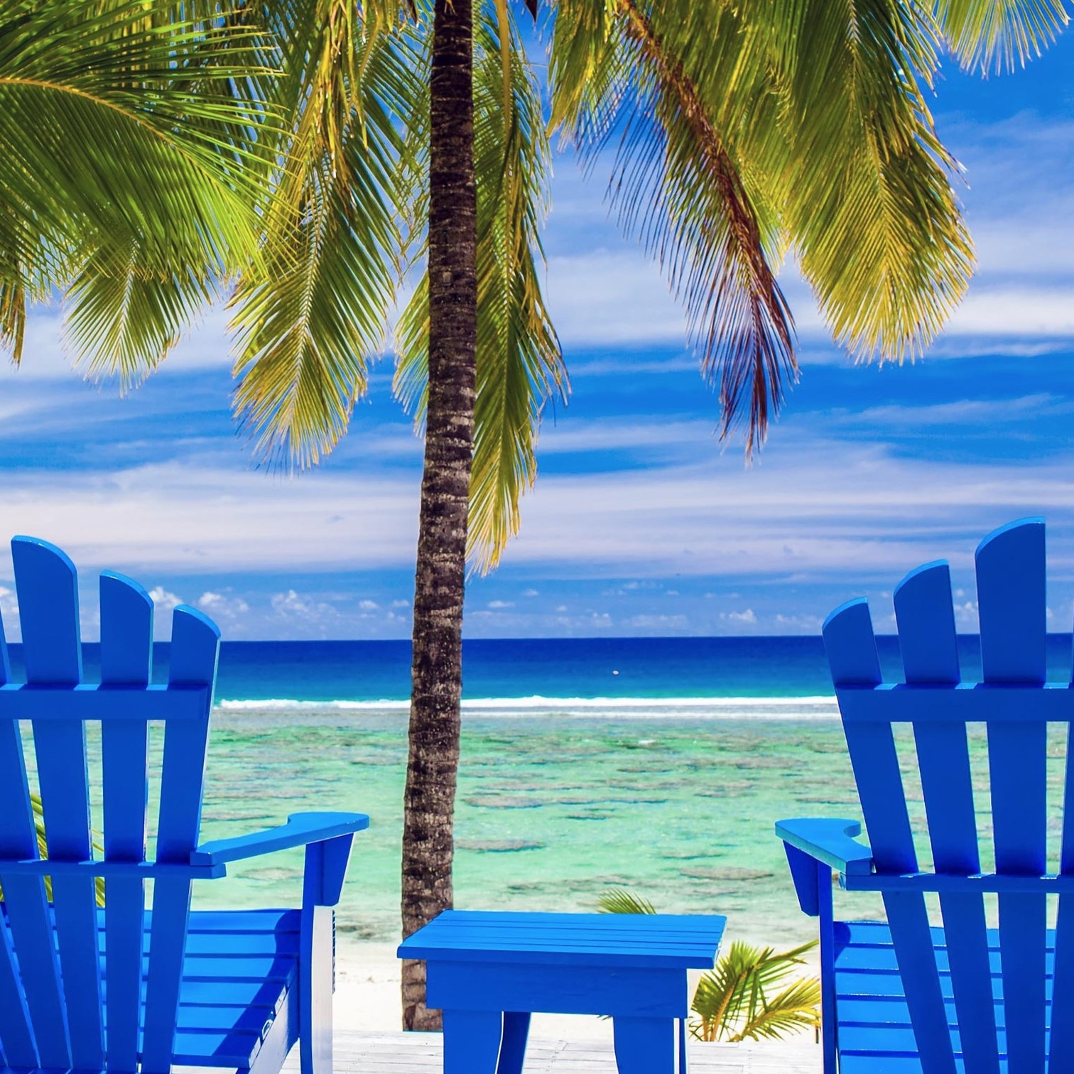 palm tree and beach chairs