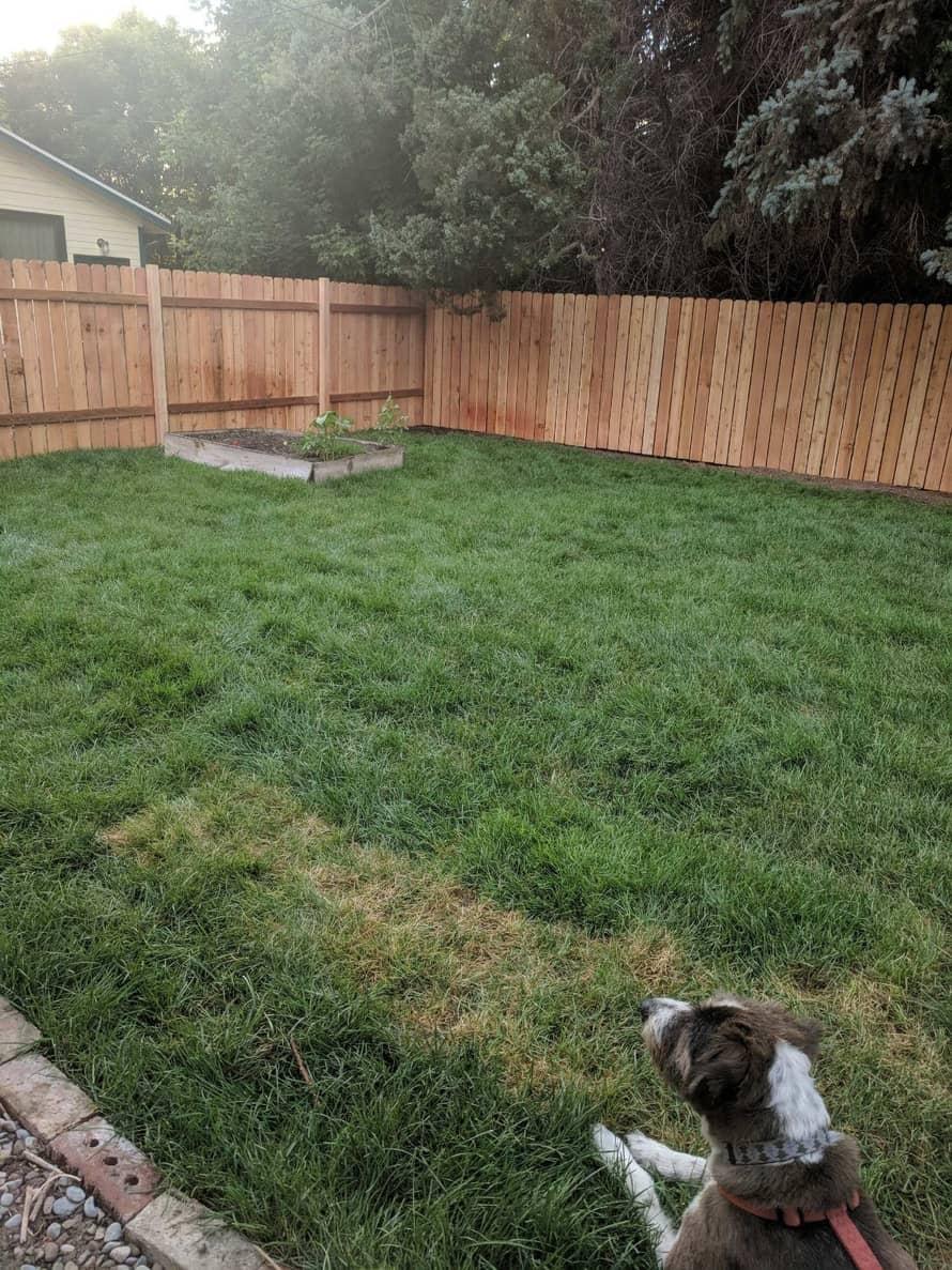 dog in fenced backyard