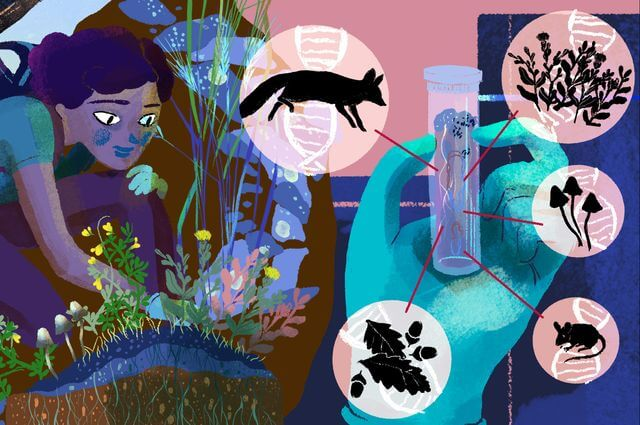 Illustration of a girl collecting specimens: being a citizen scientist