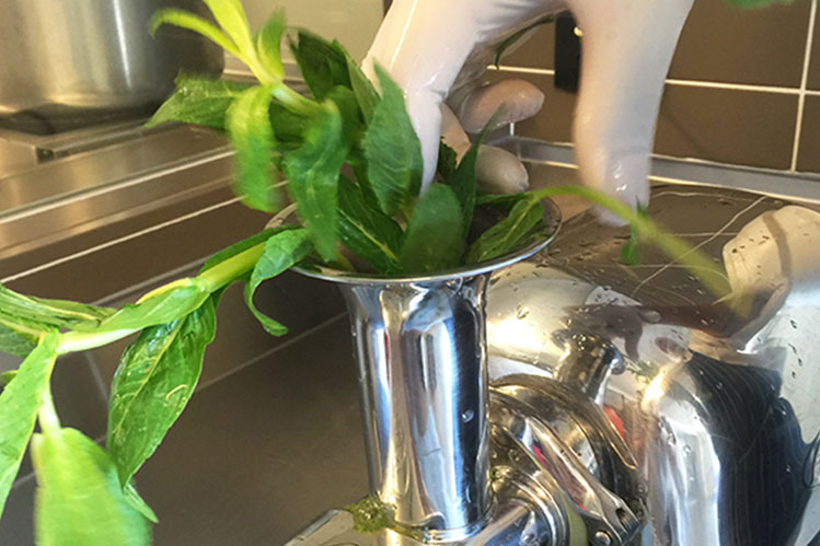 Fresh mint for our Choc Mint gelato being put through the cold press