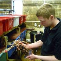 Orkney Lobster Hatchery