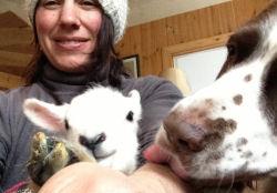 Lismore Lambs