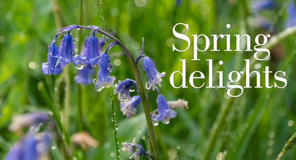 Spring delights: short breaks at the Pierhouse Hotel & Seafood Restaurant