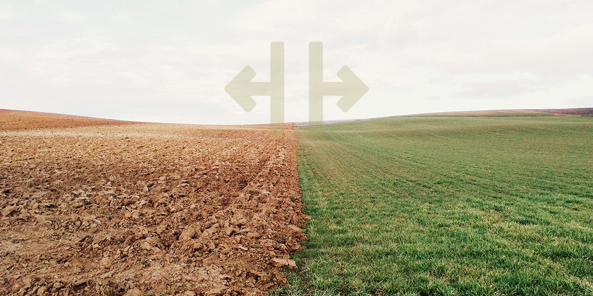 Image of two fields