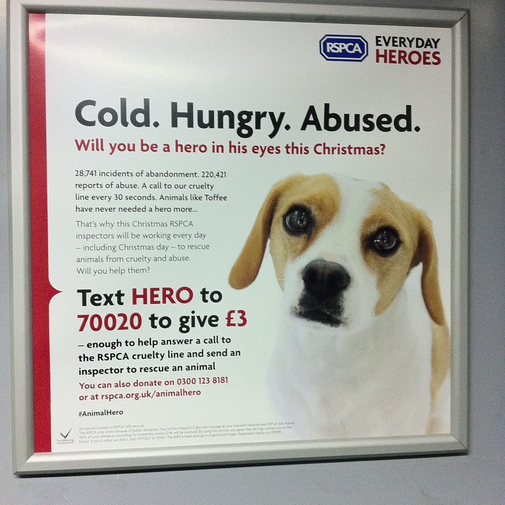 RSPCA Ad for abused dogs