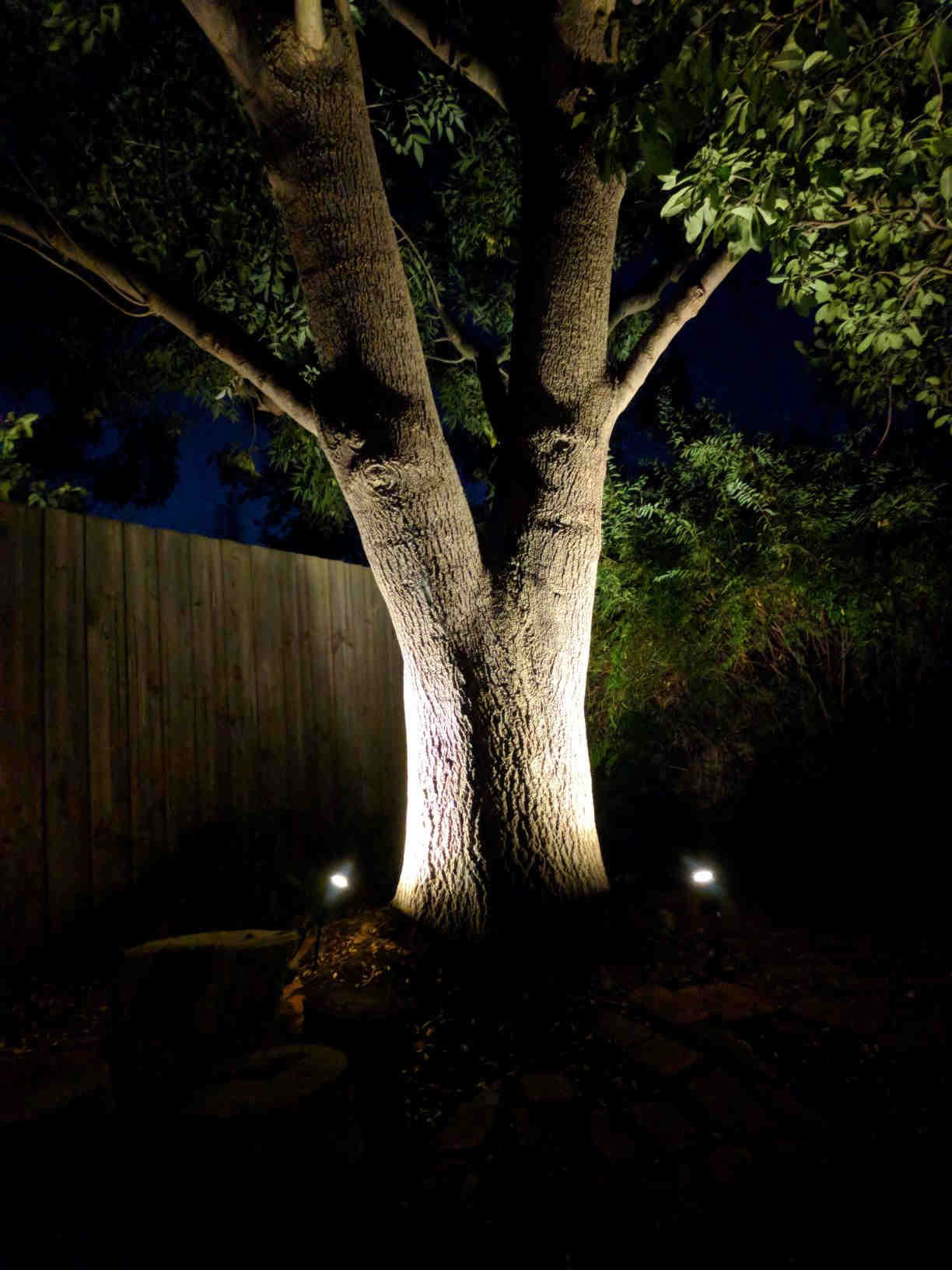 Feature lighting on a big tree